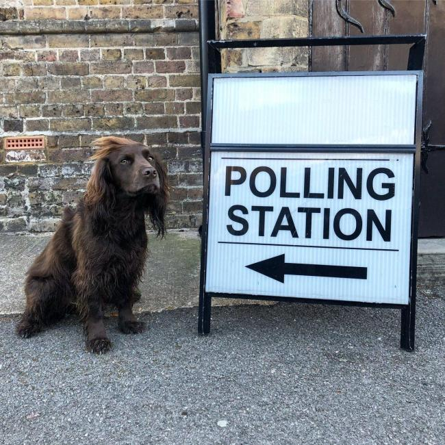 General Election 2019: Dogs at polling stations