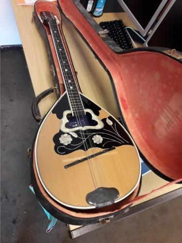 Appeal to find Mandolin owner