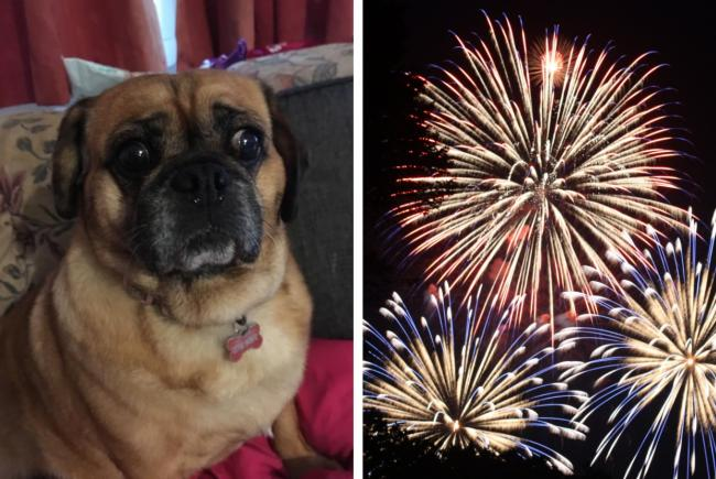 Woman calls for shops to ban sale of fireworks after rescue dog suffers serious injuries. Pictures: Vets Now/Canva