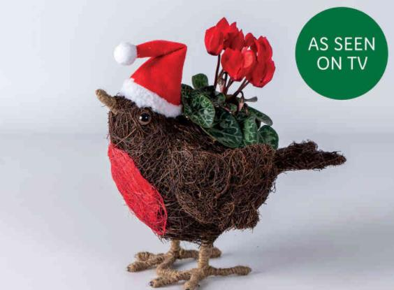 Reading Chronicle: Sisal Robin Planter with Cyclamen. Picture: Lidl