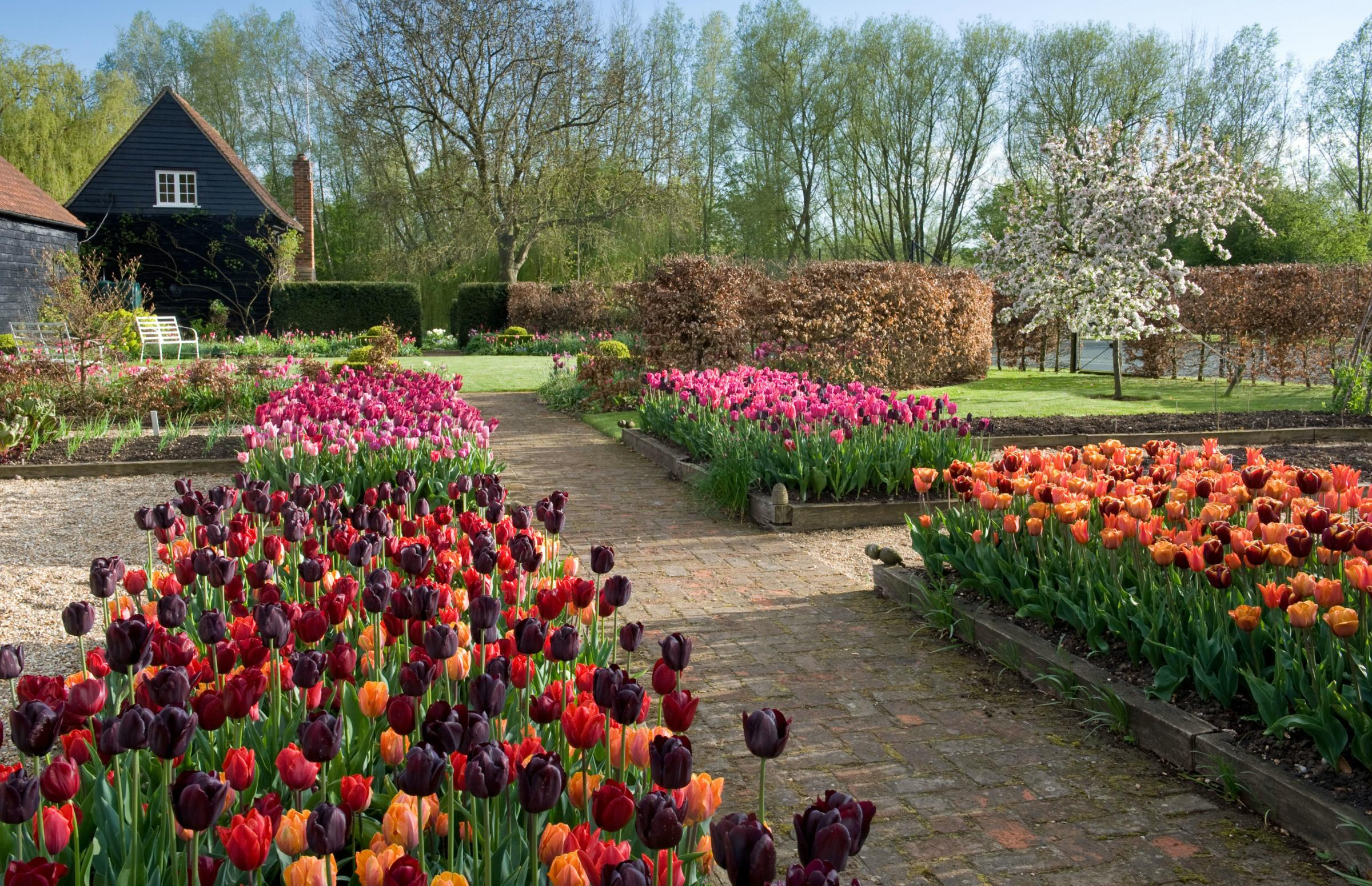 Photo of tulip borders at Ulting Wick, Essex.PIc: Marcus Harpur/PA