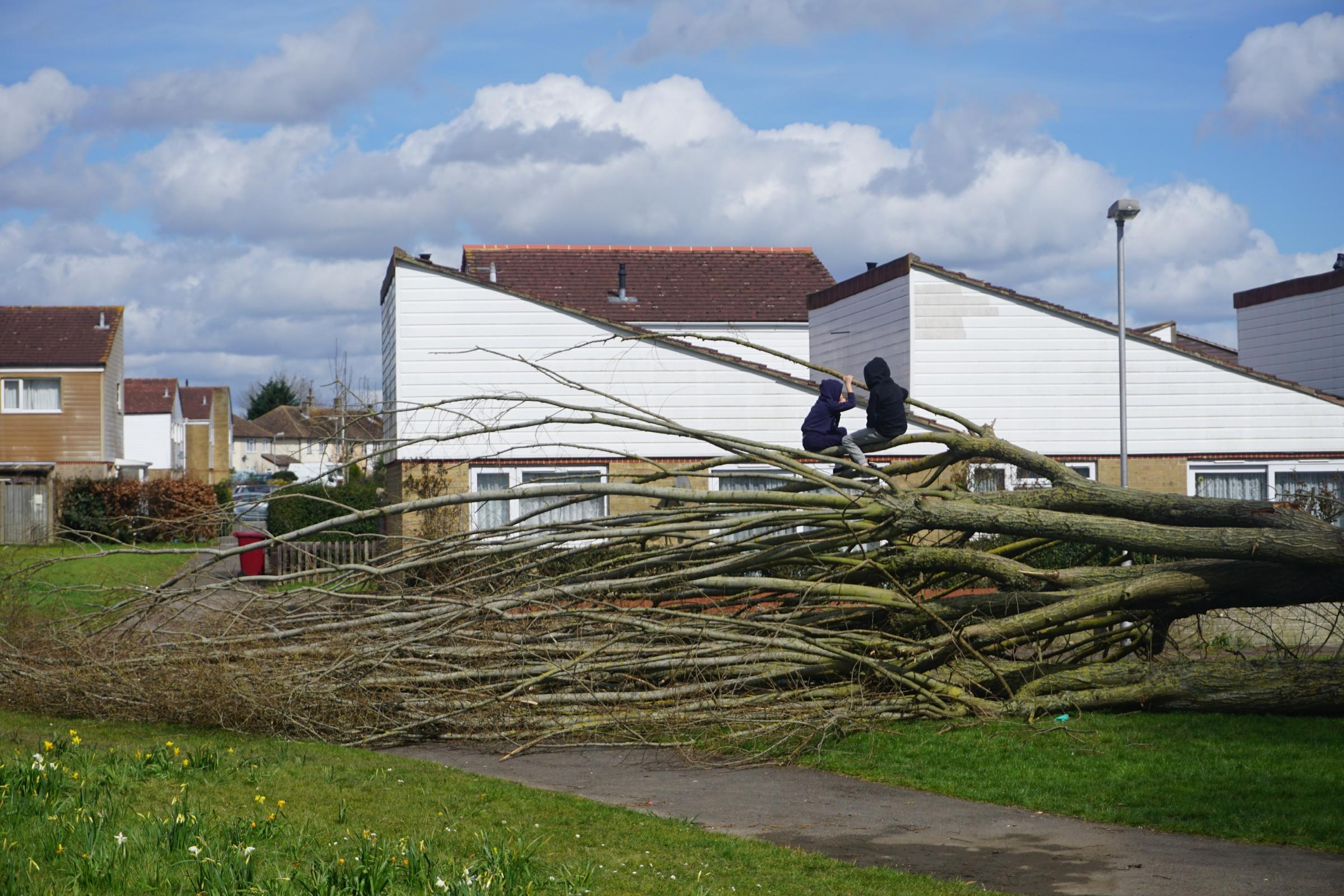 Storm Katie fells tree in Whitley creating