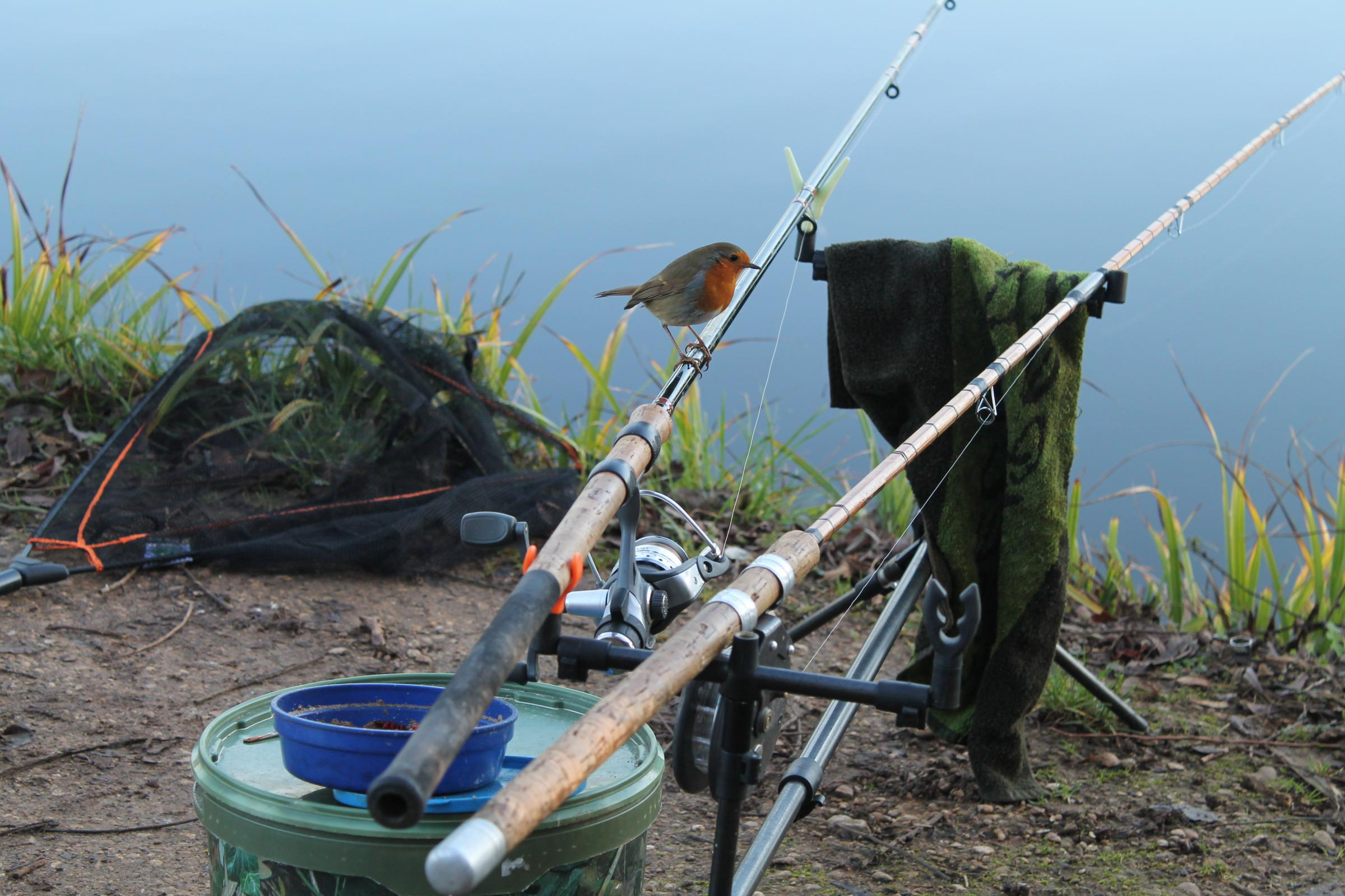 From: Alan Goodchild [] .Sent: 06 January 2015 14:55.To: MS-Oxford Editorial.Subject: Robin..Please see attached copy of picture of robin sitting on my fishing rod.. .Mr Allan Goodchild.date of birth 08. 08. 1948
